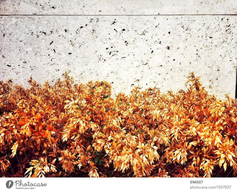 Herbst Natur Pflanze Sommer Stadt Blume Blatt Umwelt Wand Blüte Gefühle Frühling Gras Mauer grau Stein