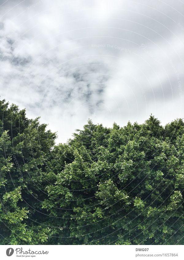 Geteilt Umwelt Natur Landschaft Luft Himmel Wolken Gewitterwolken Frühling Sommer Herbst Winter Klima Klimawandel Wetter Pflanze Baum Blatt Garten Park Wald