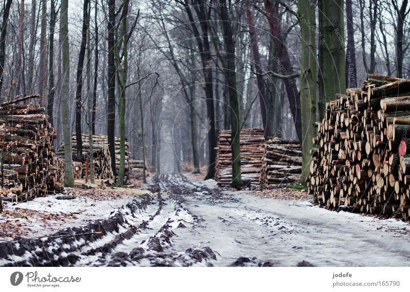 der weg ist das ziel Natur Baum Winter ruhig Einsamkeit Ferne Wald kalt Schnee Holz Wege & Pfade Landschaft Eis Umwelt Erde Trauer