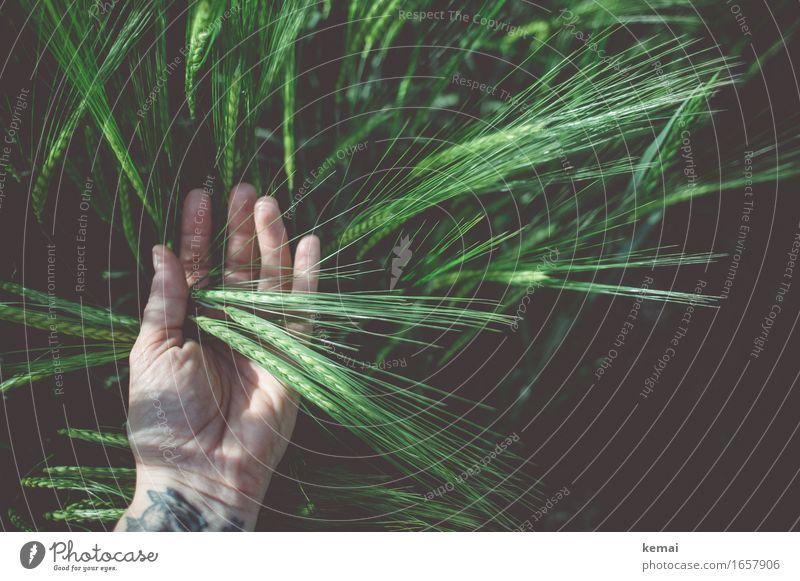 AST9 | Korn liegt auf der Hand Mensch Natur Pflanze Sommer schön grün Leben Feld lernen Finger Schönes Wetter berühren festhalten entdecken Tattoo