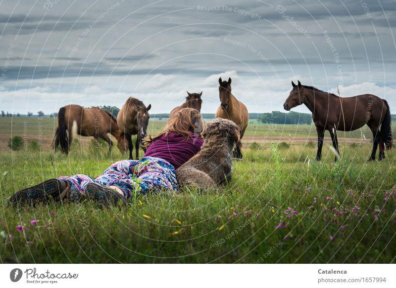 Freundschaften feminin Junge Frau Jugendliche Familie & Verwandtschaft 1 Mensch 18-30 Jahre Erwachsene Landschaft Pflanze Tier Gewitterwolken Gras Feld Haustier
