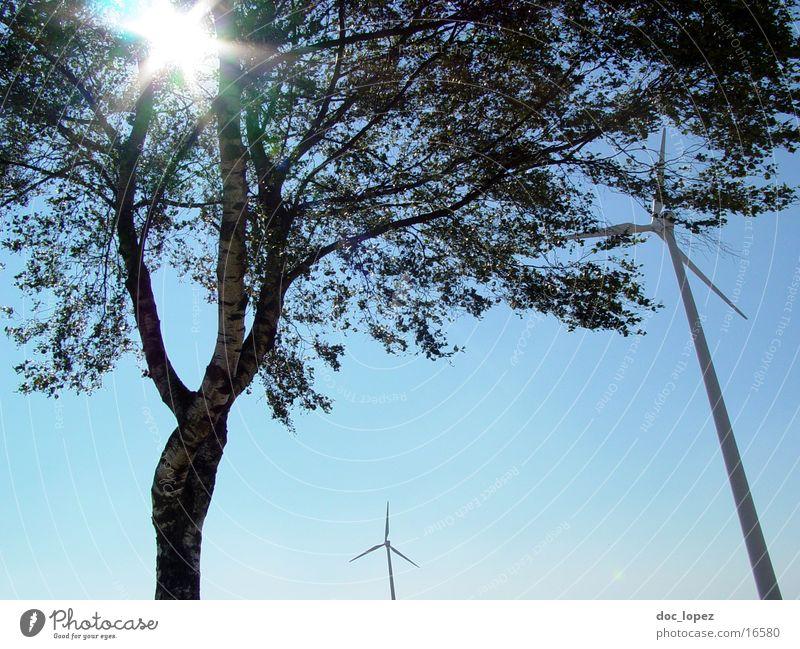 der_Sonne_entgegen_1 Baum blenden Stimmung Gegenlicht Rauschen Windkraftanlage Himmel Landschaft alternative Energie gewinnen