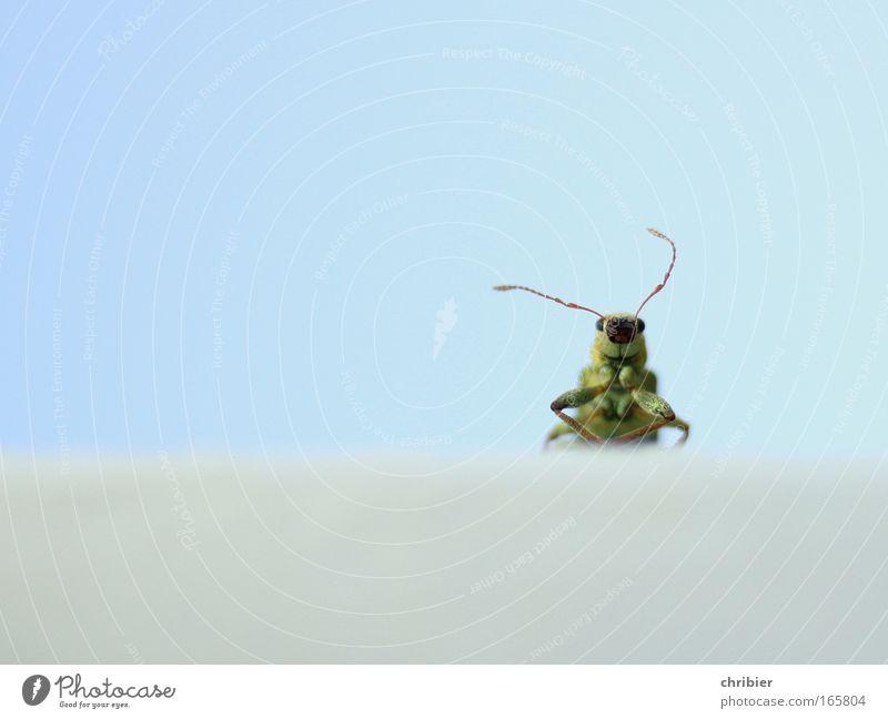 Ice Age 3: Jetzt stürmts! Natur blau grün Tier Einsamkeit ruhig Umwelt oben Freiheit klein Denken lustig hell Wind warten Klima