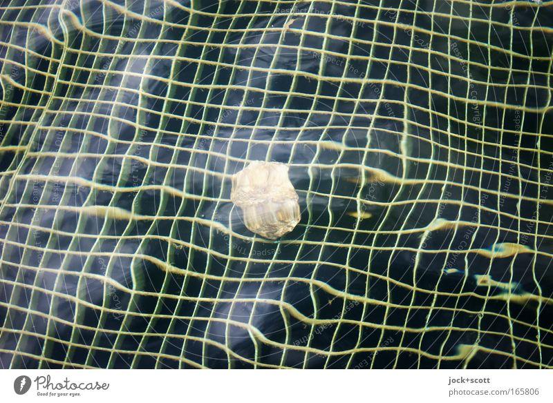 (B9) Linea Wasser Stein Linie liegen einfach Netzwerk Tiefenschärfe Gelassenheit Flüssigkeit Rost Irritation eckig Surrealismus Gitter beweglich Illusion