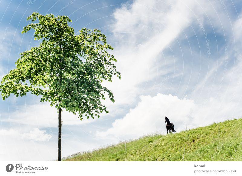 AST9 | Hi, Fury! Umwelt Natur Landschaft Himmel Wolken Sonnenlicht Sommer Schönes Wetter Baum Grünpflanze Wiese Tier Nutztier Pferd 1 stehen Wachstum warten