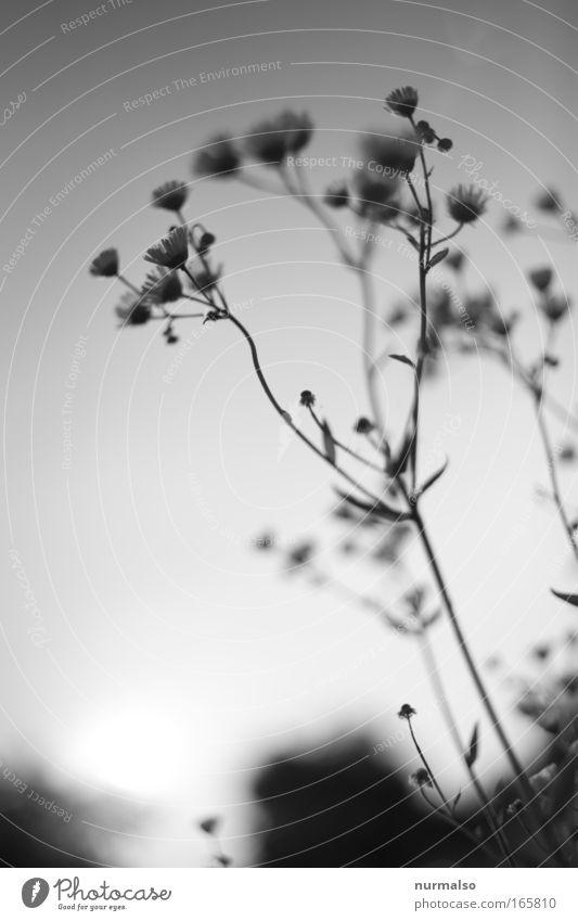 zärtlichkeit Natur schön Pflanze Tier Leben Wiese Glück träumen Gesundheit Feld ästhetisch Grafik u. Illustration einfach berühren Blühend Duft