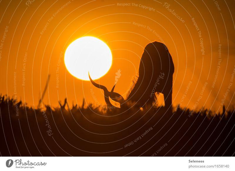 Sonne am Spieß Himmel Natur Ferien & Urlaub & Reisen Sommer Landschaft Tier Ferne Umwelt Wiese Freiheit Horizont Tourismus frei Wildtier Ausflug