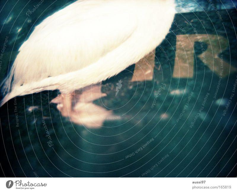 T R = T. Rex Farbfoto Experiment Menschenleer Textfreiraum unten Dämmerung Unschärfe Tierporträt Umwelt Natur Küste Seeufer Flussufer Bucht Nutztier Vogel 1