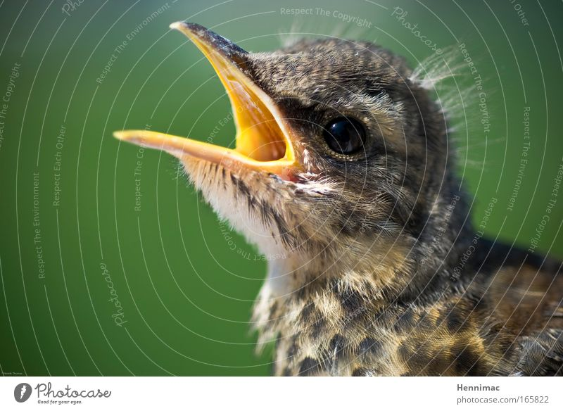Leben. Natur Tier klein Tierjunges Vogel Park braun Angst Wildtier Fröhlichkeit niedlich weich Tiergesicht schreien füttern Frühlingsgefühle