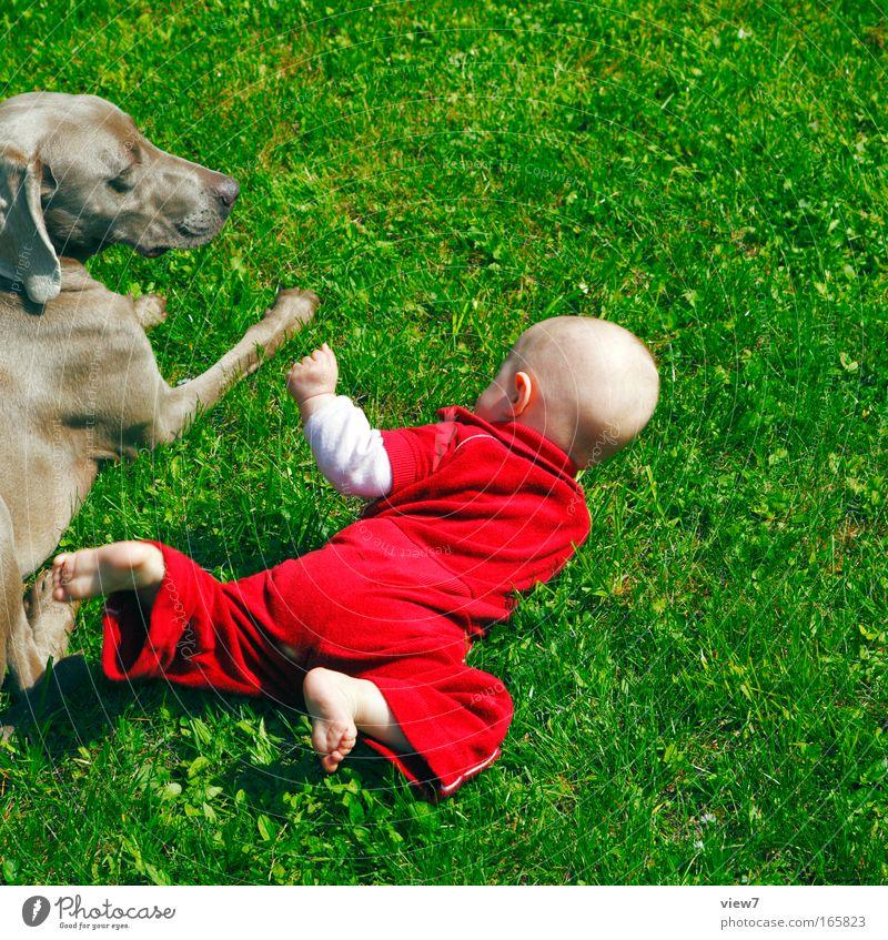 Entdeckerchen Mensch Kind Hand Mädchen Sommer Tier Erholung Wiese Hund Umwelt Spielen Gras Beine Fuß Freundschaft Wetter