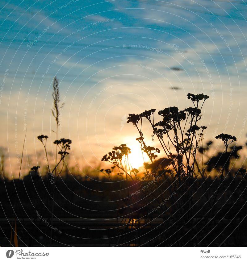 Ausklang Natur Himmel Sonne Pflanze ruhig Einsamkeit Gefühle Freiheit Traurigkeit Stimmung Umwelt Sträucher Frieden Gelassenheit