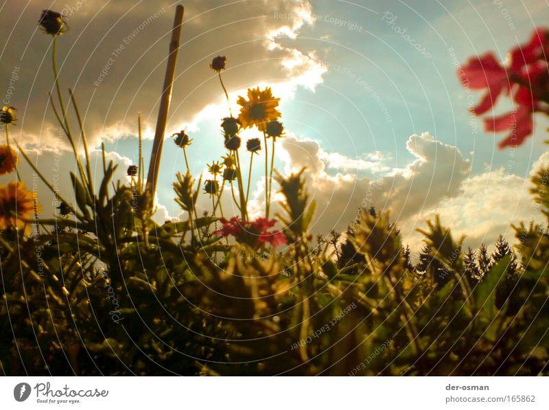 Blume Pflanze Freude Blüte Glück Gesundheit frisch Fröhlichkeit Kitsch Warmherzigkeit Freundlichkeit Frosch Morgendämmerung Käfer Sympathie Grünpflanze