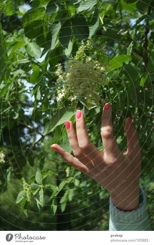 Fummelfrüchtchen Mensch Natur Jugendliche Hand Baum Pflanze Sommer Blatt ruhig Erholung Umwelt Leben feminin Bewegung Frühling Glück