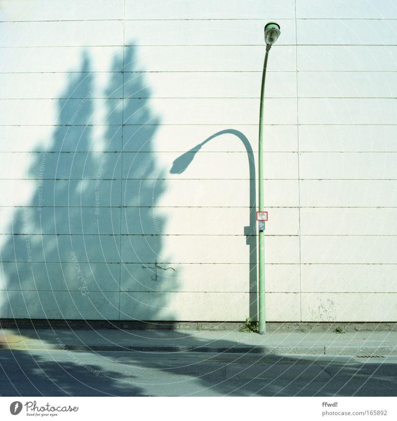 Vorstadtgewächs Farbfoto Außenaufnahme Tag Schatten Zentralperspektive Pflanze Baum exotisch Stadt Gebäude Mauer Wand Fassade Straße Wege & Pfade Lampe Laterne