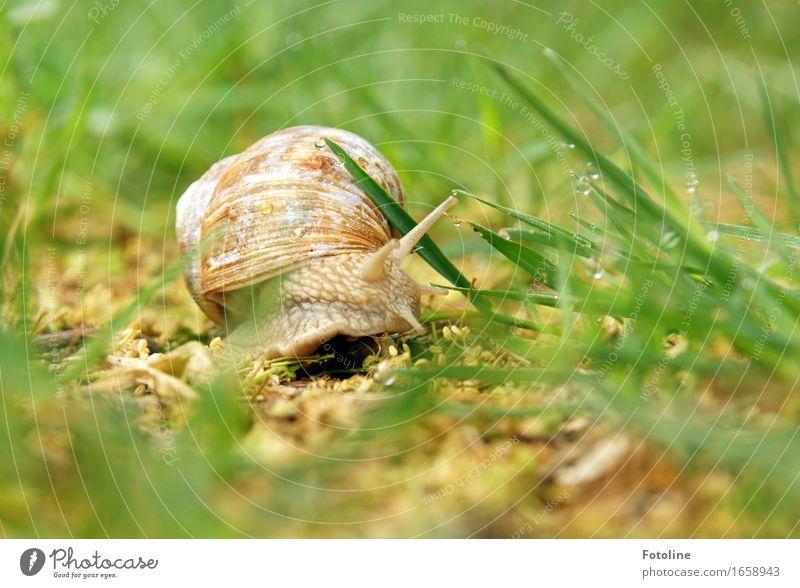 Abbiegen Umwelt Natur Pflanze Tier Urelemente Erde Wasser Wassertropfen Sommer Gras Garten Park Wiese Schnecke 1 hell nah nass natürlich braun grün