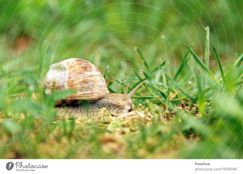Auf Reisen Umwelt Natur Pflanze Tier Urelemente Erde Wasser Wassertropfen Sommer Schönes Wetter Gras Garten Park Wiese Schnecke 1 frei klein nah nass natürlich
