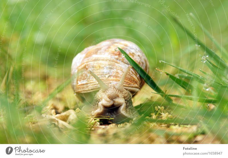 Unterwegs mit Wohnwagen Umwelt Natur Pflanze Tier Urelemente Erde Wasser Wassertropfen Sommer Schönes Wetter Gras Garten Park Wiese Schnecke 1 hell nah nass