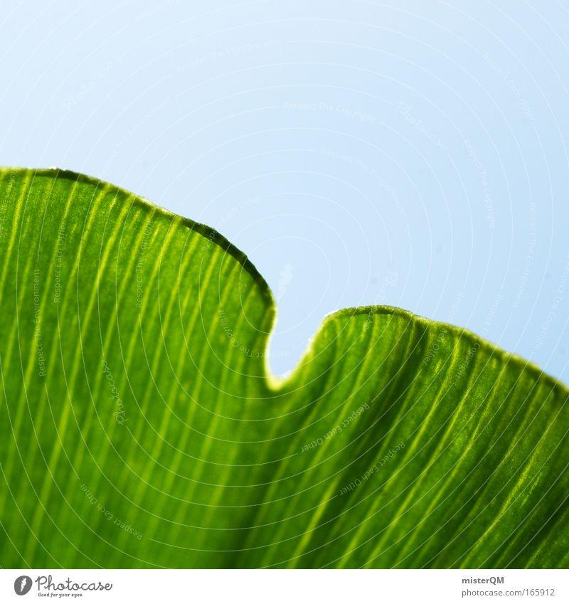 Ginkgo oder Klee? Farbfoto Außenaufnahme Muster Menschenleer Tag Schwache Tiefenschärfe Makroaufnahme Nahaufnahme Natur Umwelt grün Himmel Faser