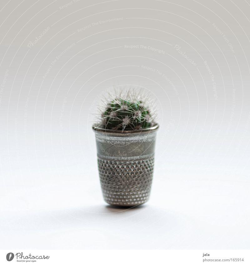 mini mini kaktus Pflanze Kaktus Grünpflanze Topfpflanze ästhetisch außergewöhnlich klein winzig schön stachelig Spitze Fingerhut Farbfoto Innenaufnahme