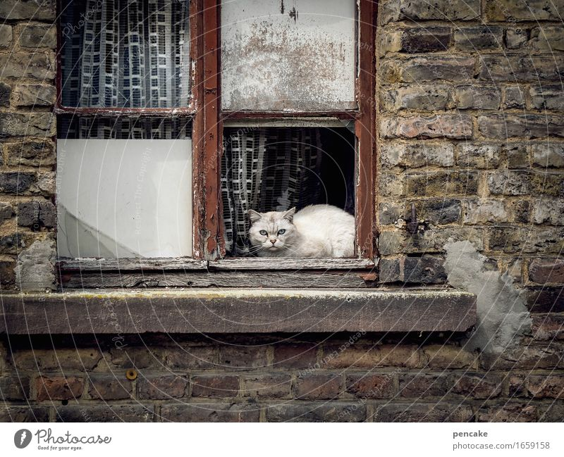 sanierungswesen Altstadt Haus Ruine Mauer Wand Fenster Tier Haustier Katze 1 Aggression alt authentisch dreckig kaputt retro Zukunftsangst Misstrauen