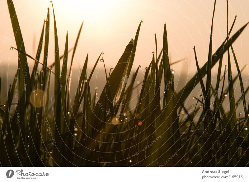 Morgens um 7 in Dresden Himmel Natur grün Sommer Tier kalt Erholung Wiese Gras Landschaft Frühling Umwelt Erde glänzend Wassertropfen frisch