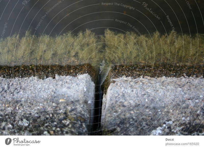 Teichrandprotisten Natur Wasser grün Pflanze Stein Umwelt Beton Seeufer bizarr Zwischenraum