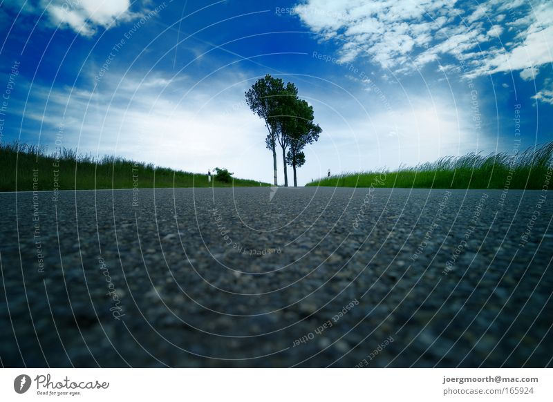 wo ist das X? Natur Himmel weiß Baum Sonne grün blau Wolken Straße Gras Landschaft Umwelt Beton Horizont