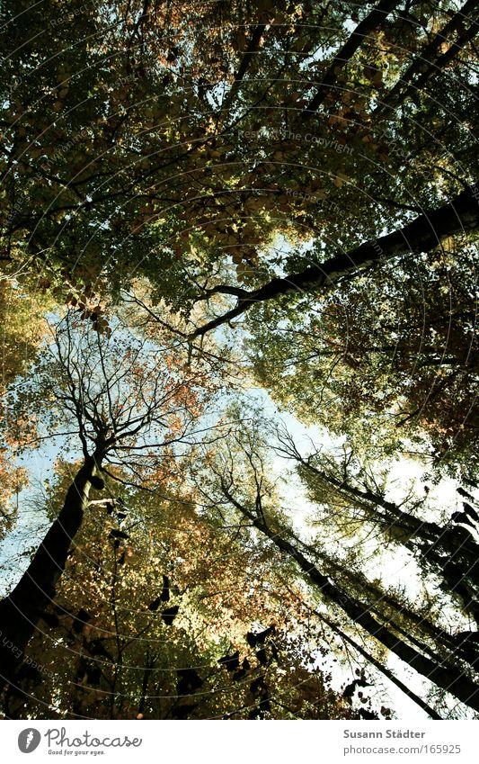 Christi Himmelfahrt Außenaufnahme Muster Textfreiraum oben Textfreiraum unten Kontrast Blick nach oben Landschaft Luft Sonne Schönes Wetter entdecken genießen