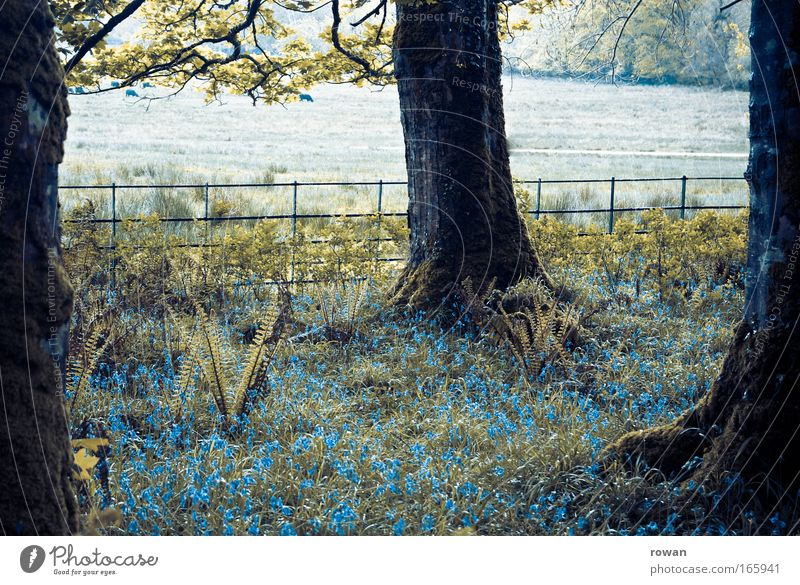 waldidyll Natur Baum Blume blau ruhig dunkel Gras träumen Traurigkeit Nebel nass trist Sträucher Idylle Moos Surrealismus