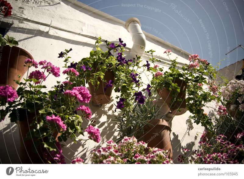 Farbfoto Außenaufnahme Menschenleer Altstadt Haus Terrasse Natur Spanien Cordoba Blüte mediterran