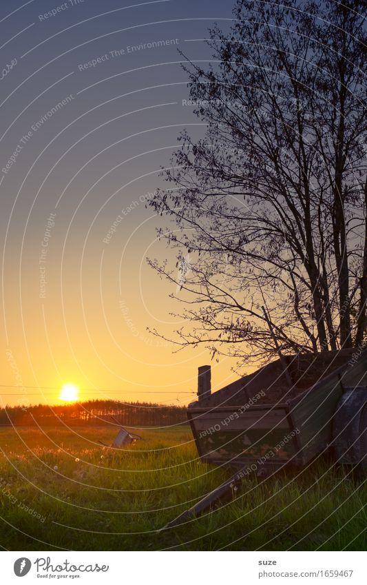 Schlusslicht Natur alt Pflanze Sommer Landschaft Wiese Gras Stimmung Feld Idylle Vergänglichkeit Romantik Vergangenheit Landwirtschaft Weide Bauernhof