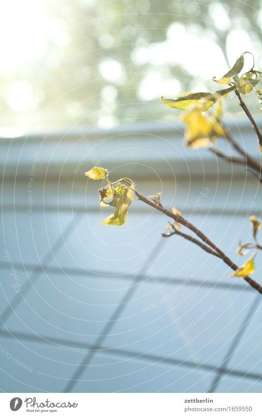 Sag es mit Blumen Blüte Blatt Blumenstrauß Ast Zweig Vase Fliesen u. Kacheln wandfliese Fenster Licht hell Häusliches Leben Wohnung Schmuck Baumschmuck Raum