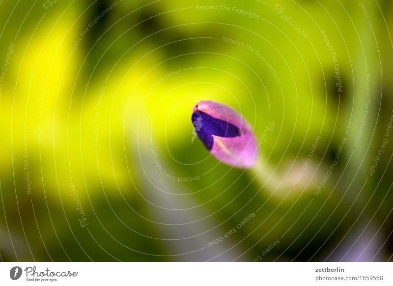Demnächst eröffnet für Sie hier eine Blume Blühend Blüte Erholung friedlich Garten Gras Schrebergarten Natur Rasen ruhig Sommer Textfreiraum Wachstum Wetter