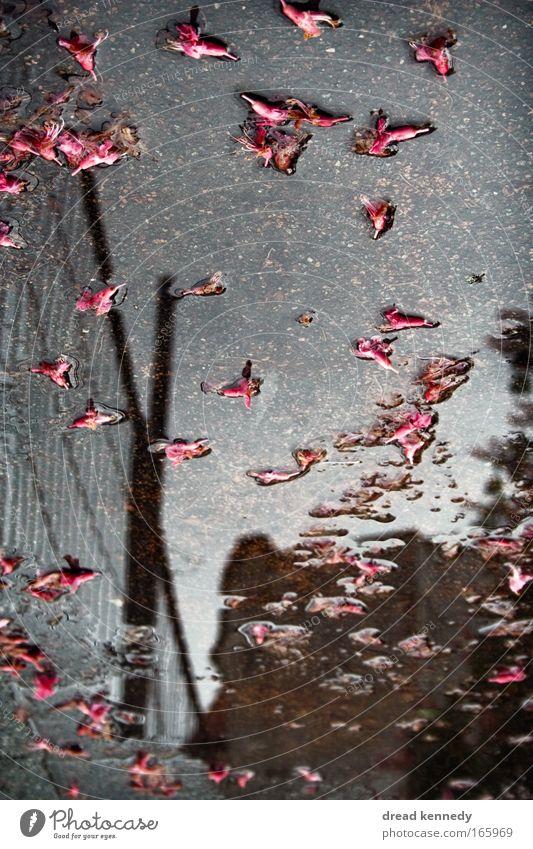Danke Für Blumen Farbfoto Reflexion & Spiegelung ruhig Haus Wasser Himmel Wolken Unwetter Regen Blatt Blüte träumen nass trist Pfütze Selbstportrait Spiegelbild