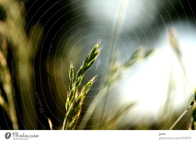 silence schön grün Pflanze Sommer ruhig Tier Wiese Gras Frühling träumen Hoffnung Schönes Wetter Grünpflanze