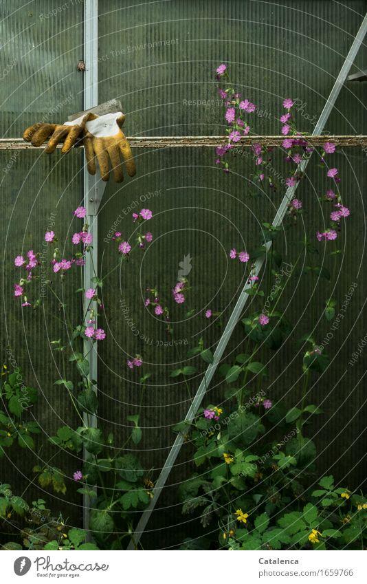 Höchste Zeit Natur Pflanze grün Blume gelb Garten Arbeit & Erwerbstätigkeit rosa Metall Freizeit & Hobby Wachstum Glas Blühend Duft Gartenarbeit Schnecke
