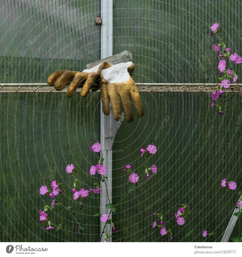 Abgelegt Freizeit & Hobby Gartenarbeit Gewächshaus Pflanze Tier Blume Schnecke Gartenhandschuhe Blühend verblüht alt gelb grün rosa ruhig anstrengen
