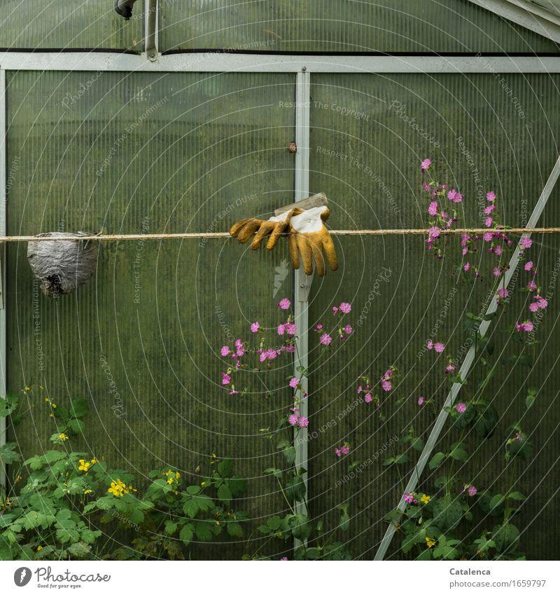 Schon länger nichts mehr getan Gartenarbeit Gewächshaus Pflanze Blatt Blüte Wespennest Glas Metall Arbeit & Erwerbstätigkeit Blühend verblüht dehydrieren