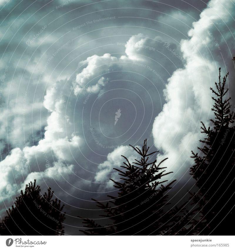 Ungetüm in den Wolken Himmel Natur Baum Pflanze Wolken ruhig dunkel Landschaft Regen Mund nass Klima Sträucher bedrohlich gruselig Sturm
