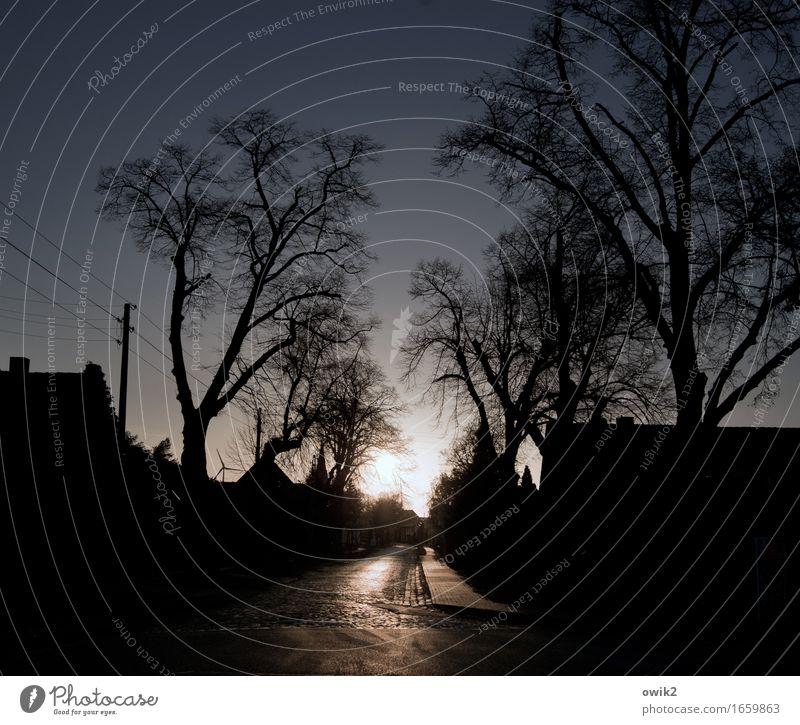 Verkehrberuhigte Zone Baum Haus dunkel Straße Horizont glänzend Zufriedenheit leuchten Idylle Zukunft Bürgersteig Dorf Wolkenloser Himmel Strommast friedlich