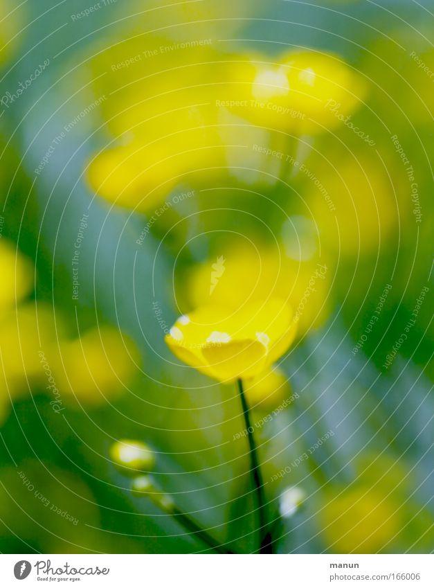 bluring wildflowers Blume grün Pflanze Sommer gelb Wiese Blüte Frühling Park frisch Fröhlichkeit ästhetisch außergewöhnlich leuchten Schönes Wetter