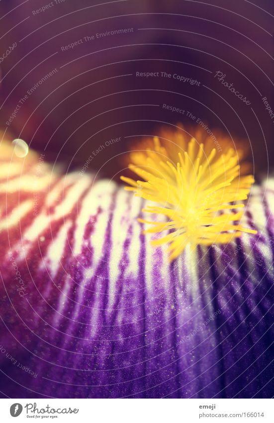 nicht unbekannte aber namenslose Blume (für mich) Blume Pflanze Sommer Blüte Frühling violett Schönes Wetter