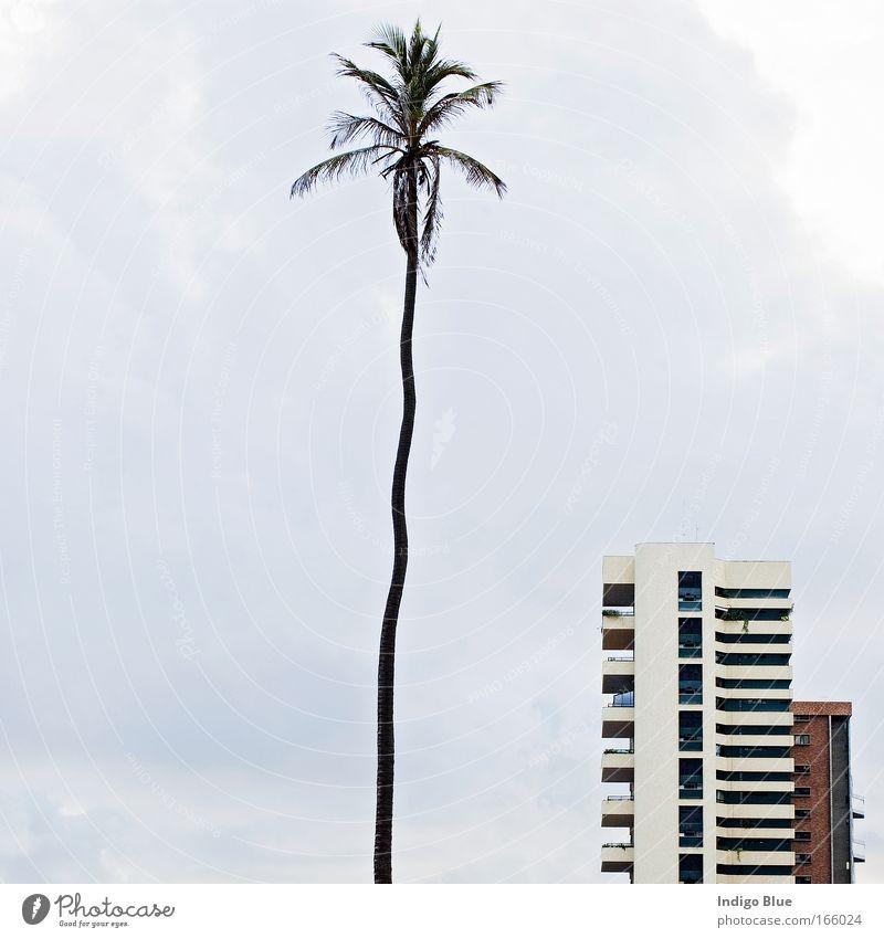 Natur Baum Stadt Ferien & Urlaub & Reisen Zufriedenheit Kraft Küste lustig Erfolg hoch dünn einzigartig fest Neugier führen