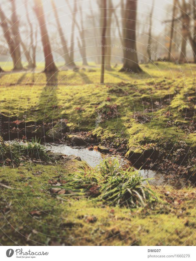 Zauberwald Himmel Natur Pflanze Sommer Wasser Sonne Baum Landschaft Winter Wald Umwelt Gefühle Herbst Frühling Wiese Gras