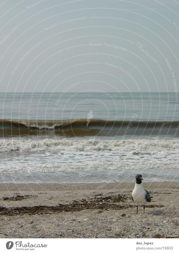 Edisto_Beach_1 Strand Möwe Vogel Wellen Wellengang trüb Stimmung Edisto Island USA Wasser Sand Landschaft Brandung Sandstrand Horizont trist Küste Tag grau