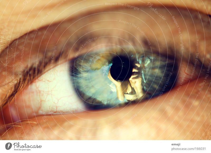 in his eyes Farbfoto Außenaufnahme Nahaufnahme Detailaufnahme Makroaufnahme Tag Blick Blick in die Kamera Ferien & Urlaub & Reisen Sommer Sommerurlaub Sonne