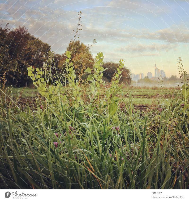 Skyline Himmel Natur Pflanze Sommer Stadt grün Baum Landschaft Wolken Umwelt Gefühle Herbst Frühling Wiese Gras Gebäude