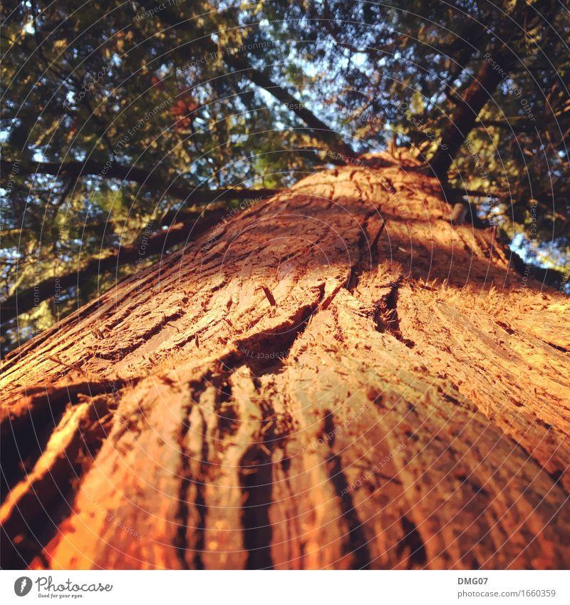 Aufstieg Himmel Natur alt Pflanze Sommer Sonne Baum Wald Umwelt Leben Gefühle Herbst Senior Frühling Wiese Holz
