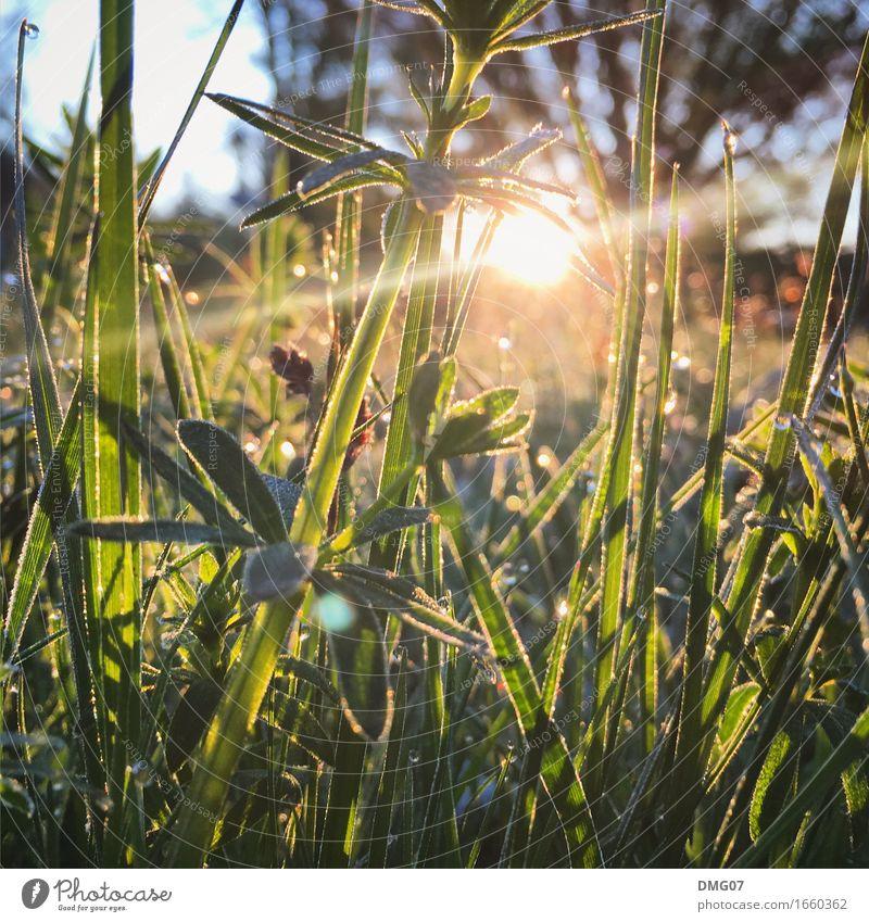 Gras Freizeit & Hobby Spielen Ferien & Urlaub & Reisen Sommer Sommerurlaub Sonne Umwelt Natur Landschaft Pflanze Tier Sonnenaufgang Sonnenuntergang Sonnenlicht