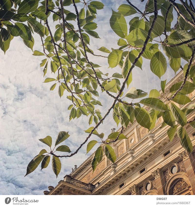 Up in the Sky Lifestyle kaufen Reichtum elegant Stil Design Umwelt Natur Himmel Wolken Frühling Sommer Herbst Klima Wetter Pflanze Baum Blatt Park